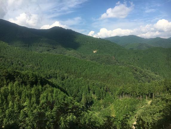 手入れのいきとどいた森林は、山に絨毯を敷き詰めたように見える