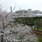 桜ごしの会場